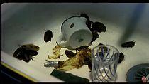 Coup De Lune (tv Short 2000)