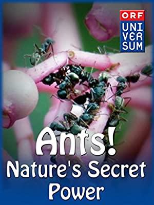 Ants: Nature's Secret Power