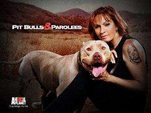 Pit Bulls And Parolees: Season 10