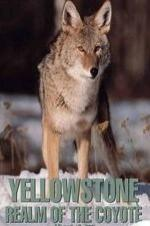 Yellowstone: Realm Of The Coyote