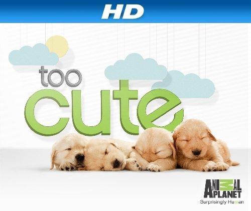 Too Cute!: Season 2